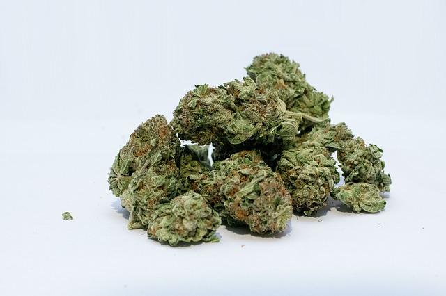 sušena marihuana