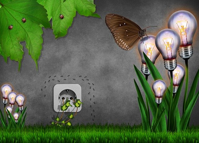 žárovky vyrůstající z trávy